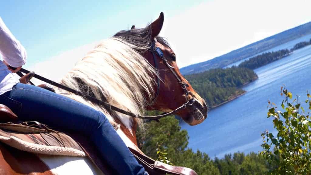 Närbild på en häst.