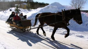 En häst drar en släde dör det sitter flera människor.